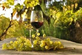 vini naturali le caratteristiche