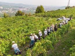 vini naturali i benefici